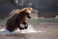 20 вдохновляющих фото дикой Камчатки