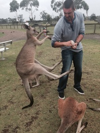 Уморительные животные Австралии, которые совсем не прочь подружиться с человеком