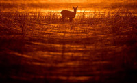 20 интересных и необычных снимков животных