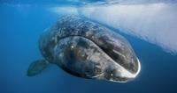 10 самых долгоживущих организмов на Земле