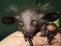 16 жутких и странных живых существ будто с другой планеты
