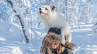 15 забавных и очаровательных животных, которые умеют наслаждаться зимой