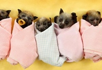 14 очаровательных животных, которых вы полюбите больше, чем котиков