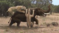 10 жутких животных, которые, слава богу, вымерли!
