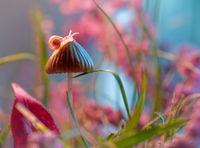 Восхитительный макромир: 16 сказочных фото природы от Магды Васичек
