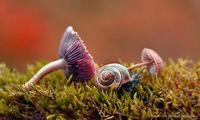 Польский фотограф делает фантастические снимки о жизни улиток