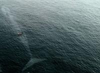 15 жутких морских фото, после которых не захочется плескаться в воде