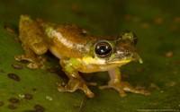 20 новых видов животных, открытых в XXI веке