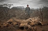 21 печальное фото, доказывающее, что мы — самые страшные звери на планете
