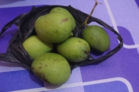 Обзор действительно экзотических фруктов