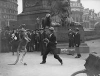 Бокс с кенгуру в фотографиях 20-го века