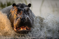 20 гениальных снимков дикой природы с конкурса National Geographic  2016