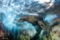 Британский музей выбрал лучшие фотографии дикой природы 2016 года