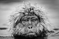15 ошеломительных фото дикой природы от любимого фотографа принца Уильяма