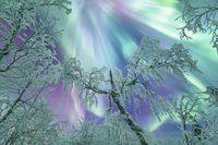 10 причин встречать Рождество в волшебной Лапландии