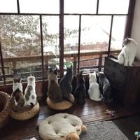 15 магических снимков Киото, пережившего сильнейший снегопад — очень редкое явление