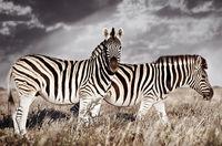20 фотографий диких животных, которые заткнут за пояс любую супермодель