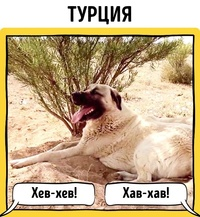 11 картинок о том, как лают собаки в разных уголках земного шара