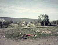 21 фото о том, как живут польские цыгане. Такого вы точно не ожидаете увидеть