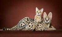 Ученые выяснили, как кошки завоевали мир