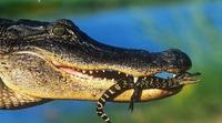 Чувствительные морды помогали динозаврам аккуратно есть