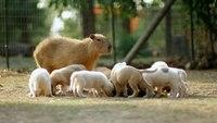7 животных с необычными профессиями