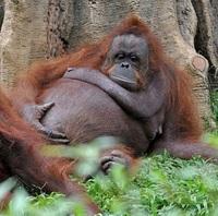 10 диких животных, которые готовятся стать мамами и выглядят сногсшибательно