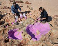 Самый большой в мире след динозавра нашли в Австралии