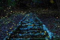 10 лучших снимков с конкурса фотографии дикой природы National Geographic