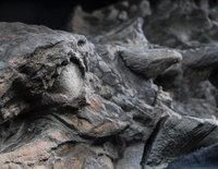 Найденный много лет назад динозавр оказался новым видом