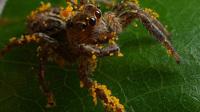 Шесть мифов о пауках