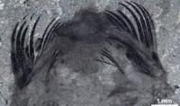 Как охотился доисторический червь с 50 шипами на голове