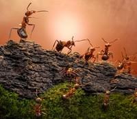 Что будет, если удалить у муравьев «социальный ген»