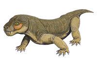 Каким было первое ядовитое животное на Земле