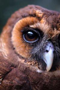 10 поразительных портретов о гипнотизирующей красоте сов