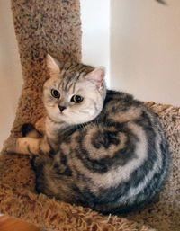 10 кошек со всех концов света с самым удивительным окрасом