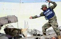 Знаменитый пес-спасатель, который помогает жертвам землетрясения в Мексике
