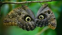 Предки бабочек научились «хитрить» еще в юрском периоде