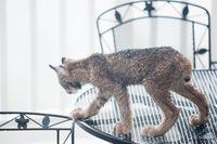 На Аляске мужчину разбудило пришедшее на его крыльцо большое семейство рысей