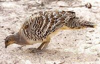 Не все птицы высиживают яйца