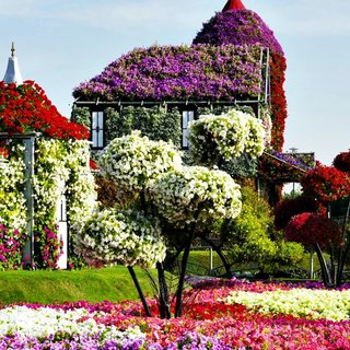 Live house in dubai miracle garden park 2
