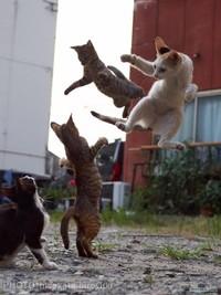 Японский фотограф снимает кошек, занимающихся боевыми искусствами