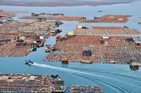 Гигантские плавучие фермы: как выращивают рыбу в Китае