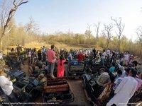 Фото горящего слоненка и другие финалисты фотоконкурса дикой природы Sanctuary