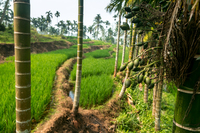 Индонезия: как место проживания связано с уровнем жизни