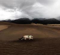 20 эпичных фото собаки и кошки, которые знают, что такое крутые путешествия