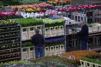 Головокружительный цветочный аукцион в Голландии для ценителей со всего мира