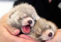 12 крошечных малышей, которые помещаются на ладошке