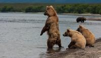 Курильское озеро: райское место для бурых медведей, нерки и фотографов