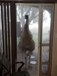 Новый тренд: люди делятся фото необычных друзей, заглянувших к ним в окно